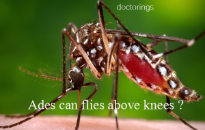 Know About Dengue Fever